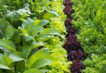 comment planter légumes dans le jardin