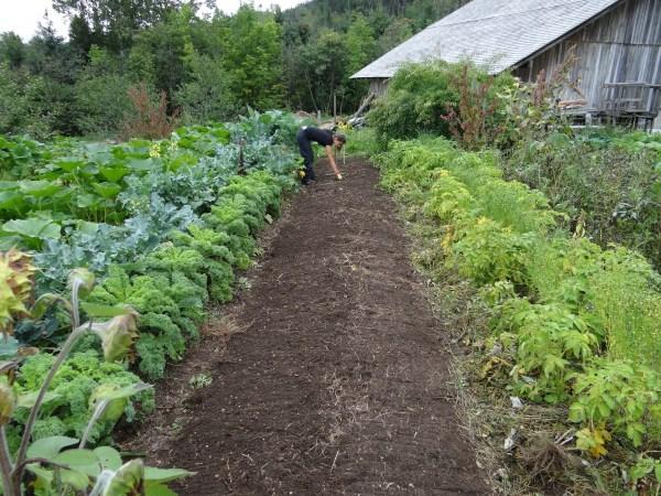 plantation des légumes dans le jardin