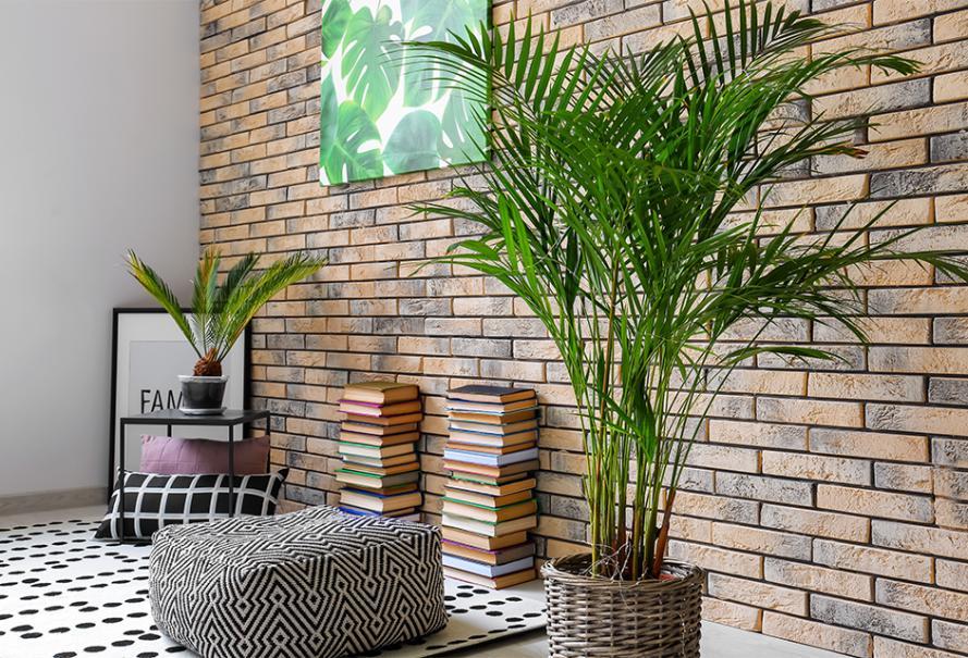 Le palmier areca