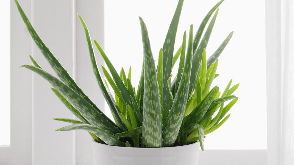 Les 10 plus belles plantes d'intérieur